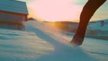 LOW ANGLE: Brown Horse Walking Through The Deep Snow At Foggy Winter Sunrise.