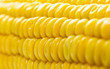 Macro view of fresh yellow sweet corn or maize