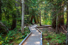 Wooden Walkway On A Trail Arou...