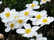 秋咲きのバラ