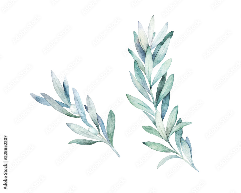 Fototapety, obrazy: Watercolor olive branch. Hand drawn winter illustration