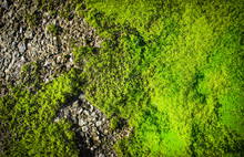 Moss Texture On The Old Asphal...