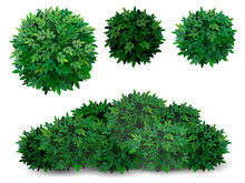 Vector Bush In Different Forms. Tree Crown.  Ornamental Plant Shrub  For Decorate Of A Park, A Garden Or A Green Fence.