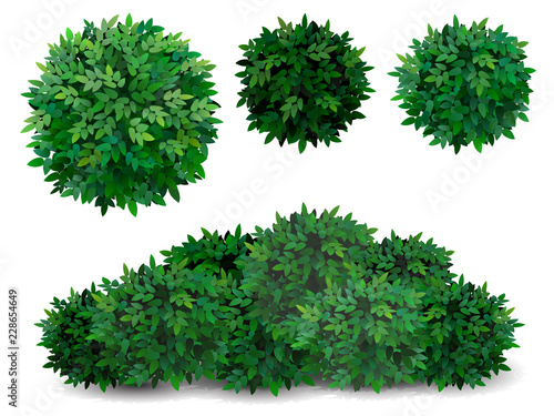 Leinwand Poster Vector bush in different forms