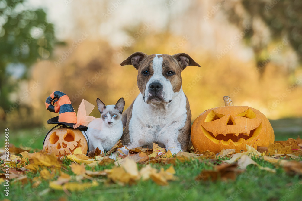 Dog and cat with halloween pumpkins