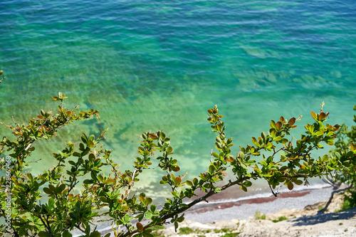 Photo  flowers on the beach