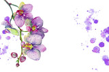 Fototapeta Orchid - Watercolor orchid flowers isolated on white background. Orchid blooming branch. Hand painted illustration for greetings, invitations, pattern design.