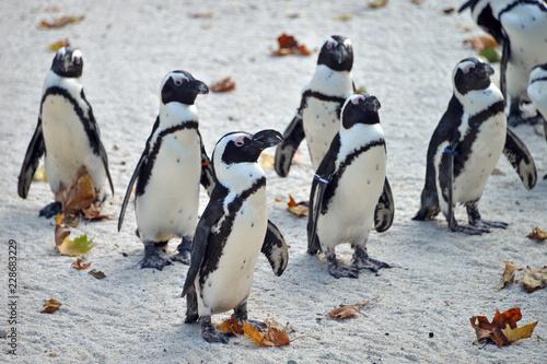 gruppo di pinguini in piedi in attesa