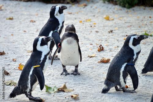 Spoed Foto op Canvas Pinguin gruppo di pinguini in piedi in attesa
