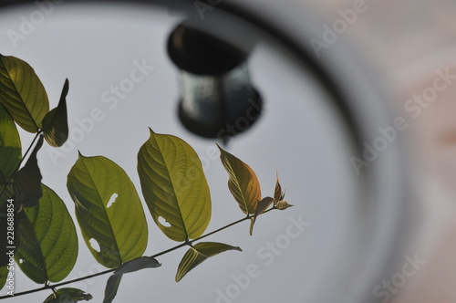 obraz PCV Water in basin with leaf and electric light pole reflection. Focus on leaf, shallow depth, abstraction.