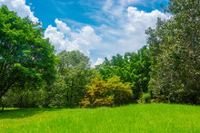 Green Meadows And Forests, Large Trees With Bright Skies And Clouds.