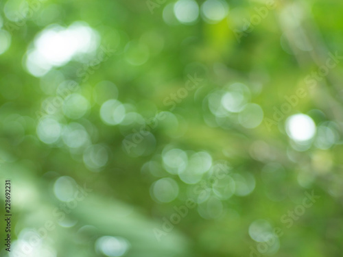 Fototapety, obrazy: blurred  background of green leaves  , with beautiful bokeh