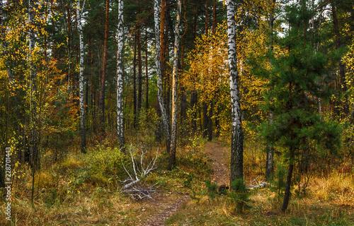 Poster Berkbosje trip to autumn. walk in the woods. autumn colors. autumn leaves. melancholy.