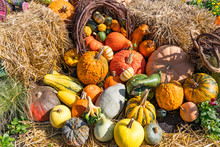 Arrangement Of Gourds And Pump...