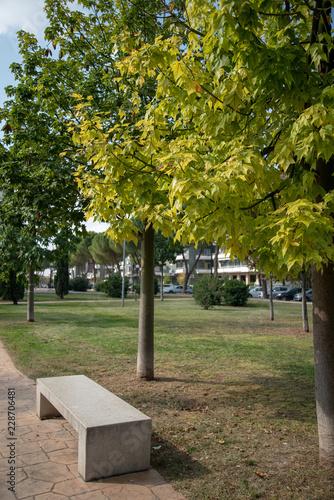 Fotografia, Obraz  Public park by autumn