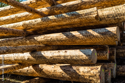 Fotografía  Peeled logs lying in piles on the ground on a sunny day.