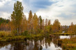 Autumn beautiful forest on the banks of the pond background