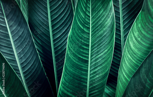 Fotografia  green leaf texture background