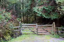 Old Wooden Gate Broken Down Fence