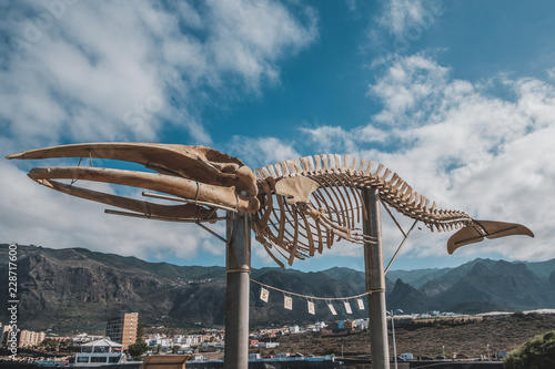 Whale skeleton in Los Silos on Tenerife, Canary Islands