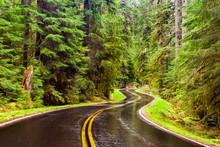 Wet Winding Road Through A Lus...