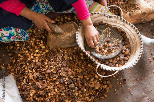 Close-up of hands of Moroccan women breaking Argan nuts (Argania spinosa) in cooperative in Morocco Canvas-taulu