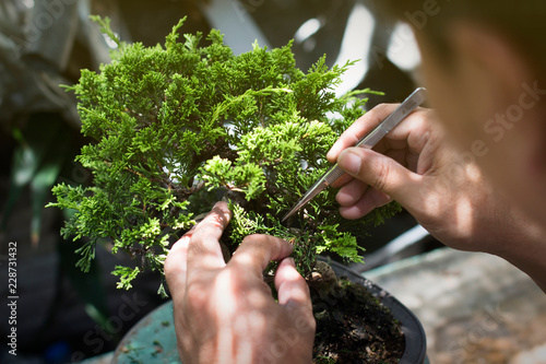 Poster Bonsai Making of bonsai trees. Handmade accessories wire and scissor bonsai, bonsai tools, stand of bonsai.