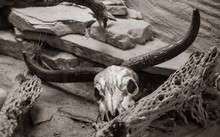 Steer Skull Is Looking At You As It Ages In The Desert In Vintage Sepia