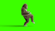 canvas print picture - Funny brown gorilla walking. Super realistic fur and hair. Green screen. 3d rendering.