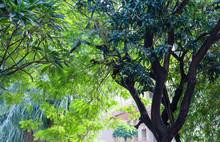 Tropical Foilage In Urban Envi...