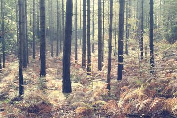 sous bois avec des arbres aux couleurs passées de l'automne