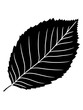 canvas print picture - schwarz buche blatt baum pflanze form clipart design wald grün blätter strauch busch blüte blume