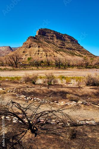 Fotografie, Obraz  Forest Fire Rocky Mountains Ash