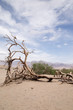 Dead tree branches in Death Valley, CA