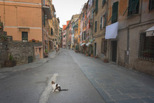 Cat On The Street - A Cat In A...