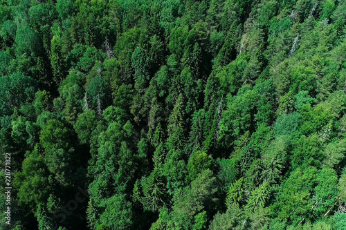 Fotobehang Bossen Aerial top view of beautiful forest and trees.