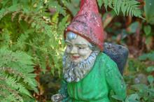 Antique Garden Gnome Among Ferns