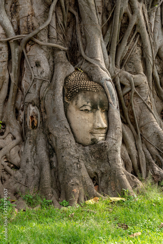 Vertical image of Head of Sandstone Buddha in the tree roots at Wat Mahathat, Ayutthaya, Thailand.
