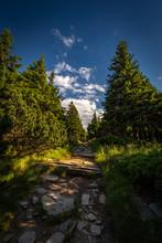 Narrow Rocky Path In The Green Forest From Serak To Velky Keprnik, Jeseniky, Czech Republic