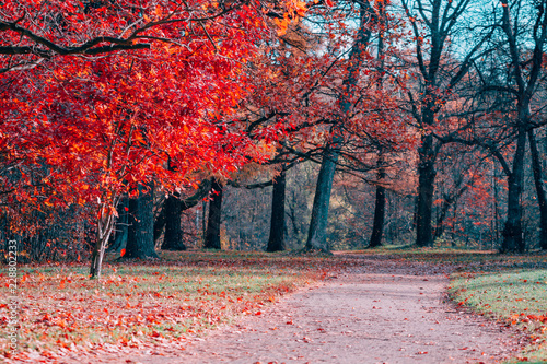 Canvas Prints Cuban Red Fantasy scene of red foliage and path in an autumn park.