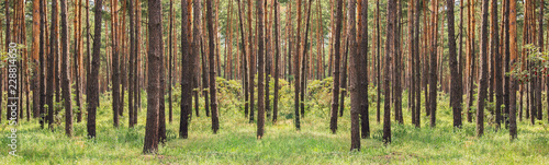 Poster Forets forest