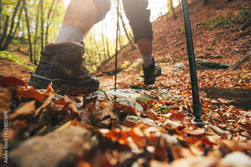 Fototapeta Close up of hiker legs with trekking poles in autumn forest obraz