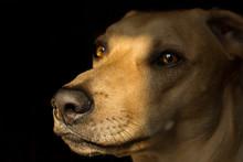 Ritratto Di Un Cane