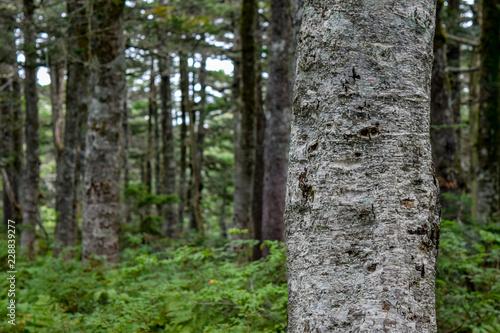 日本 森林 イメージ