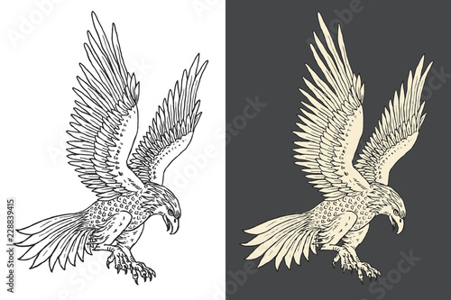 Fotografie, Obraz Hand-drawn illustration of the haunting falcon in the engraving style
