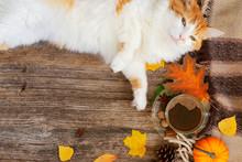 Lazy Cat Sleeps On Fall Plaid