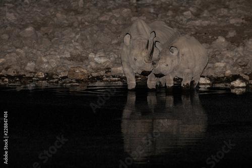Black rhino with calf on a waterhole, etosha nationalpark, namibia