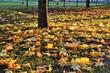 Осень. Осенние листья в парке укрыли зелёную траву