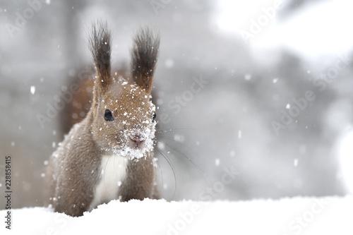 雪の日 Fototapet