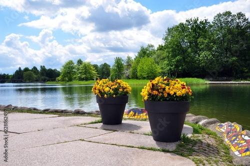 Blumen im Britzer Garten